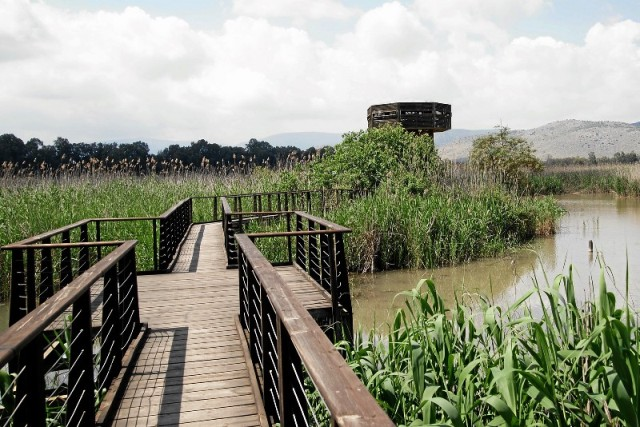 The floating bridge at the Hula Nature Reserve